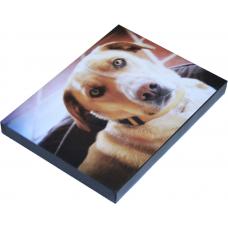 "Vinyl Print With Frame 8""x12"""