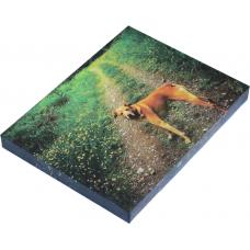 "Vinyl Print With Frame 16""x20"""